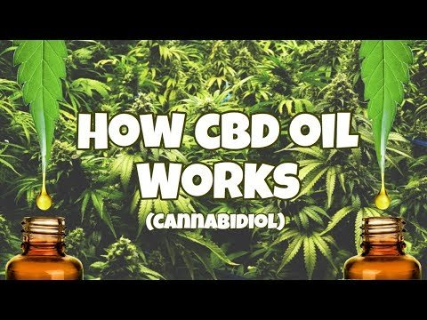 how-cbd-oil-works