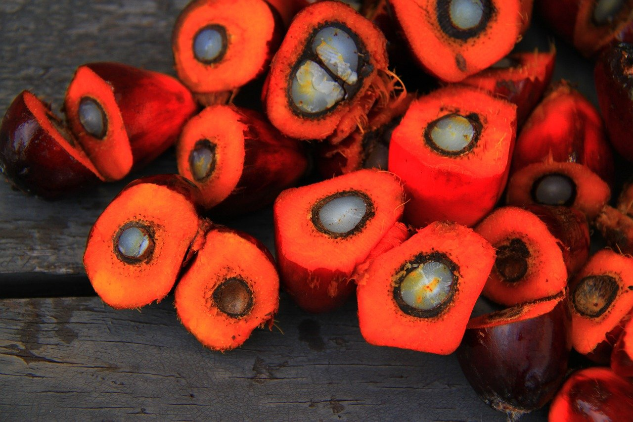 Why we should stop using palm oil products