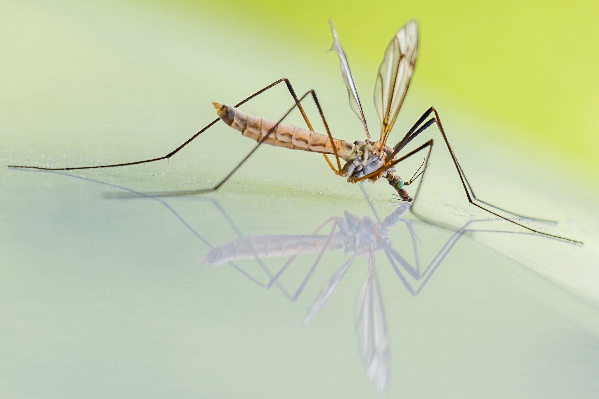 Repel-Mosquitoes