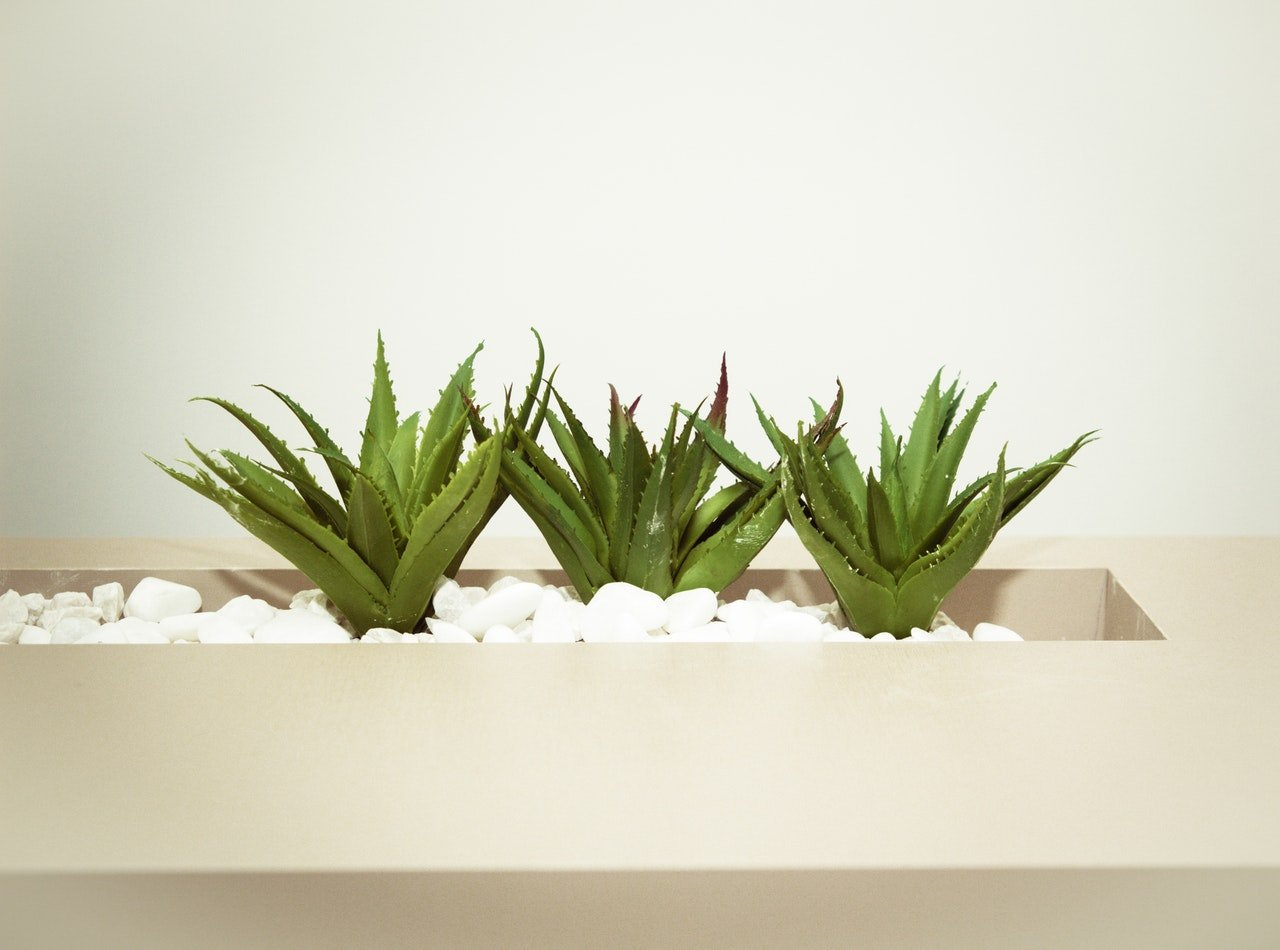 Indoor Plants You Need In Your Home